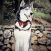 Photo of Zuko