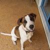 Photo of Spotty