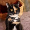 Photo of Pippa **2nd Chance Cat Rescue**
