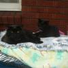 Photo of Kossie And Kimba
