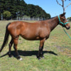 Photo of Filly 869831