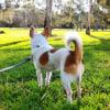 Photo of Chilli