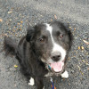 Photo of Jasper   Fantastic Companion Or Family Friend