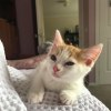 Photo of Sunny (Located In Rowville)