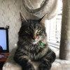 Photo of Diggy