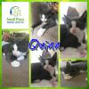 Photo of Quinn