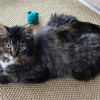 Photo of Cheryl **2nd Chance Cat Rescue**