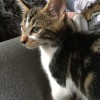 Photo of Jackson **2nd Chance Cat Rescue**