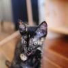 Photo of Ebony