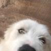 Photo of Duke * No More Calls Please*
