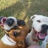 Photo of Brandi & Patchie