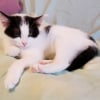 Photo of Nessy **2nd Chance Cat Rescue**
