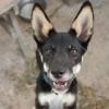 Photo of Kali Dingo