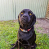 Photo of Daisy (Assisted Rehome)