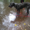 Photo of Asha **Foster Carer Needed**