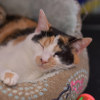 Photo of Waimarie **2nd Chance Cat Rescue**