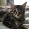 Photo of Walter **2nd Chance Cat Rescue**