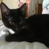 Photo of Swaney **2nd Chance Cat Rescue**