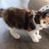 Photo of Zoe **2nd Chance Cat Rescue**
