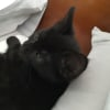 Photo of Lady Mary **2nd Chance Cat Rescue**