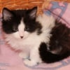 Photo of Dora **2nd Chance Cat Rescue**