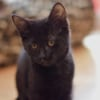 Photo of Doris ** 2nd Chance Cat Rescue**