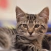 Photo of Goldaly **2nd Chance Cat Rescue**
