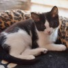 Photo of Dianne **2nd Chance Cat Rescue**