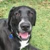 Photo of Rocky ~ Labrador X ~ On Trial 31/3/18