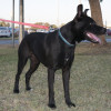 Photo of Chubs Md0018 *Adoption Pending*