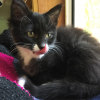 Photo of Frannie **2nd Chance Cat Rescue**