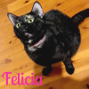 Photo of Felicia