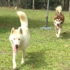 Photo of Dallas And Holly ~ Bonded Pair