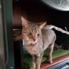 Photo of Matilda (Located In Bayswater)