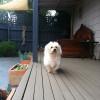 Photo of Snowy Zanzi