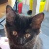 Photo of Kenna