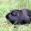 Photo of Nibbles R042