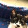 Photo of Hibbert