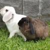 Photo of Mimco And Lulu