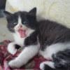 Photo of Mocha ~ $95 Adoption Fee ~