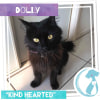 Photo of Dolly *Limited Time Valentines $50 Adoption Fee*