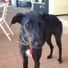 Photo of Athena **Adopted**