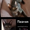 Photo of Macaroon
