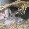Photo of Peta Rabbit (Oa V 05)