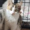 Photo of Annie