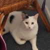 Photo of Harmy