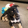 Photo of Evie **Adopted**