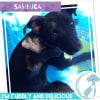 Photo of Sambucca
