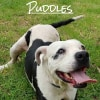 Photo of Puddles