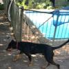 Photo of Doobie